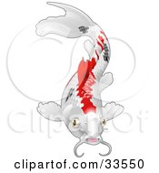 Clipart Illustration Of A Calico Koi Fish With Red And Black Markings by AtStockIllustration
