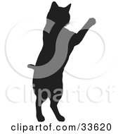 Black Silhouetted Feline Jumping Up