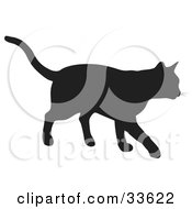 Black Silhouetted Feline Walking