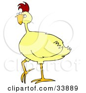 Clipart Illustration Of A Mad Yellow Chicken Gritting Its Teeth by djart