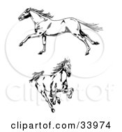 Clipart Illustration Of Two Galloping Wild Horses One In Profile Running To The Left One Running Forward by C Charley-Franzwa #COLLC33974-0078