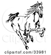 Clipart Illustration Of A Black And White Wild Mustang Running Forward Towards The Viewer by C Charley-Franzwa #COLLC33981-0078