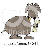 Clipart Illustration Of A Goofy Brown Spotted Dog Holding Up A Bone