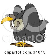 Clipart Illustration Of A Grumpy Vulture Bird Sitting On A Branch And Glancing At The Viewer by djart