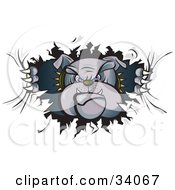 Clipart Illustration Of A Tough Bulldog In A Spiked Collar Tearing A Hole Through A Wall Or Paper And Looking Through