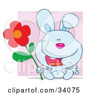 Clipart Illustration Of A Joyful Blue Bunny Rabbit Sitting With A Red Daisy Flower In Front Of A Purple Square