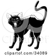 Evil Black Cat Arching Its Back Twitching Its Tail And Hissing