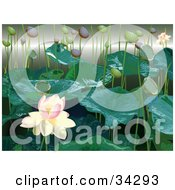 White And Pink Lotus Flower With Lily Buds And Leaves