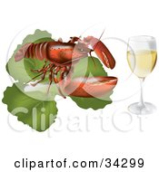Red Lobster On Top Of A Bed Of Lettuce Beside A Glass Of White Wine Or Champagne