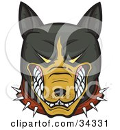 Clipart Illustration Of A Mean And Aggressive Brown And Black Pitbull Wearing A Spiked Collar And Bearing His Teeth