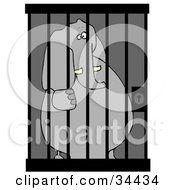 Jailed Elephant Behind Bars In A Prison Cell