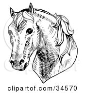Clipart Illustration Of A Shy Horses Head Facing Front by C Charley-Franzwa