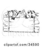 Crowd Of Cute Finches Perched On Top Of A Blank Wooden Sign