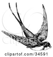 Clipart Illustration Of A Flying Swallow Swooping Down While In Flight