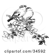 Clipart Illustration Of A Pair Of Finches Whistling While Perched In A Flowering Tree