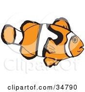 Clipart Illustration Of A White And Orange Patterned Clownfish In Profile