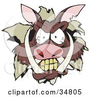 Clipart Illustration Of An Angry Boars Head Breaking Through A Wall