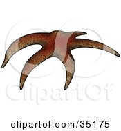 Clipart Illustration Of A Curved Brown Sea Star by dero