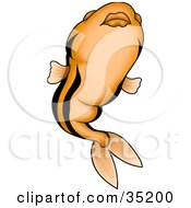 Clipart Illustration Of An Orange Fish With Black Stripes And Big Lips Swimming Upwards