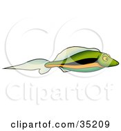 Clipart Illustration Of A Small Green Fish With Black Blue And Orange Stripes