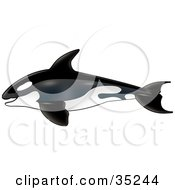 Clipart Illustration Of A Swimming Killer Whale In Profile Heading Left by dero