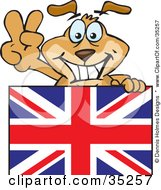 Friendly British Dog Gesturing The Peace Sign And Standing Behind A Union Jack Flag