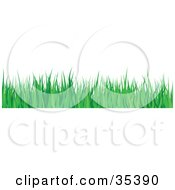 Clipart Illustration Of A Border Of Lush Green Blades Of Grass