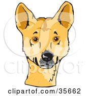 Clipart Illustration Of An Alert Decker Dog Canis Lupus Ding Looking At The Viewer by Dennis Holmes Designs