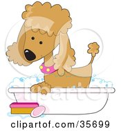 Clipart Illustration Of A Cute Apricot Poodle In A Pink Collar Taking A Sudsy Bubble Bath In A Tub