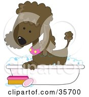 Clipart Illustration Of A Cute Chocolate Poodle In A Pink Collar Taking A Sudsy Bubble Bath In A Tub