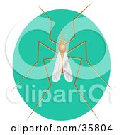 Mosquito With Long Legs On A Turquoise Oval