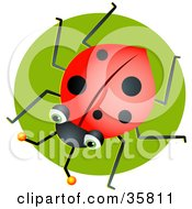 Clipart Illustration Of A Green Eyed Ladybug Over A Green Circle by Prawny