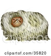 Clipart Illustration Of A Hairy Pekingese Dog Looking At The Viewer
