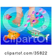 Poster, Art Print Of Person Soaking Their Feet In Water While Curious Colorful Fish Swim Around
