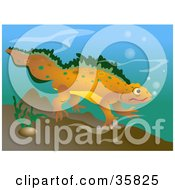 Happy Orange And Green Spotted Newt Swimming Underwater