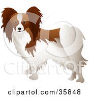 Clipart Illustration Of A Brown And White Papillon Dog Standing With Its Body Facing Left