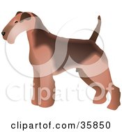 Clipart Illustration Of A Brown Welsh Terrier Dog In Profile Standing And Facing Left by Prawny
