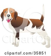 Clipart Illustration Of A Happy Brown And White Beagle Dog With His Body Facing Left