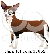 Clipart Illustration Of A Cute Brown And White Chihuahua Dog Facing Left