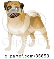 Clipart Illustration Of A Brown Pug Dog With A Curly Tail by Prawny