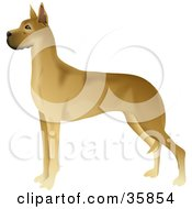 Clipart Illustration Of A Gorgeous Brown Great Dane Standing In Profile Facing Left by Prawny