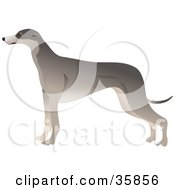 Clipart Illustration Of A Slender Greyhound Dog In Profile Standing And Facing Left by Prawny