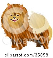Clipart Illustration Of A Friendly Brown Pomeranian Dog