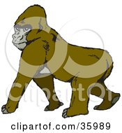 Clipart Illustration Of An Alpha Gorilla Walking And Glancing Over His Shoulder