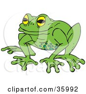 Yellow Eyed Green Frog With Spots On Its Belly