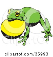 Green Frog With Air In Its Throat Pouch