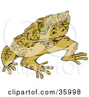 Clipart Illustration Of A Warty Green Toad Glaring At The Viewer