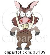 Mad Boar With Tusks And Blood Shot Eyes Standing And Throwing A Temper Tantrum