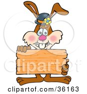 Bunny Rabbit Holding Up A Blank Wooden Plaque Or Sign Ready For Your Text
