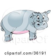 Clipart Illustration Of A Pink Bellied Hippo Standing In Profile by Dennis Holmes Designs